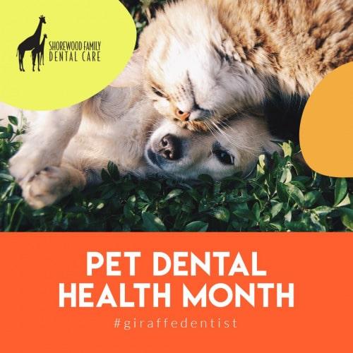 pets oral health